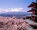 UEJF Vacances : Japon